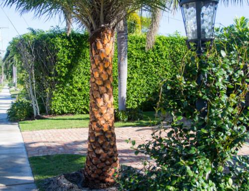 Ornamental Landscaping